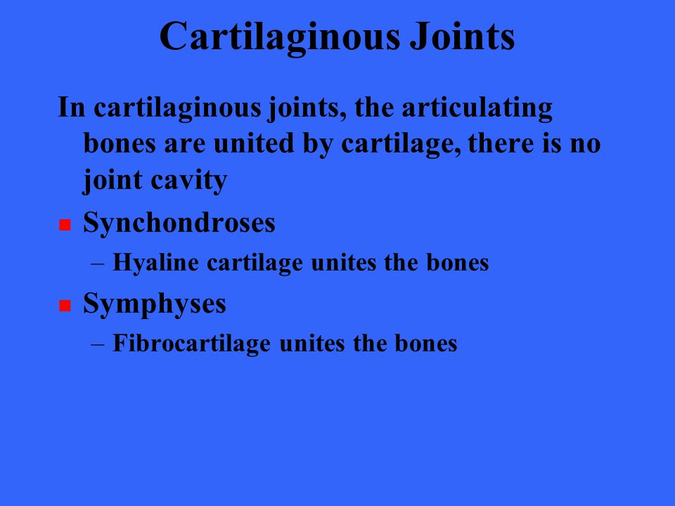 Cartilaginous Joints In cartilaginous joints, the articulating bones are united by cartilage, there is no joint cavity.