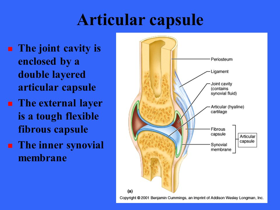 Articular capsule The joint cavity is enclosed by a double layered articular capsule. The external layer is a tough flexible fibrous capsule.