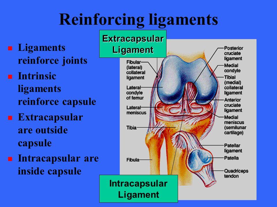 Reinforcing ligaments