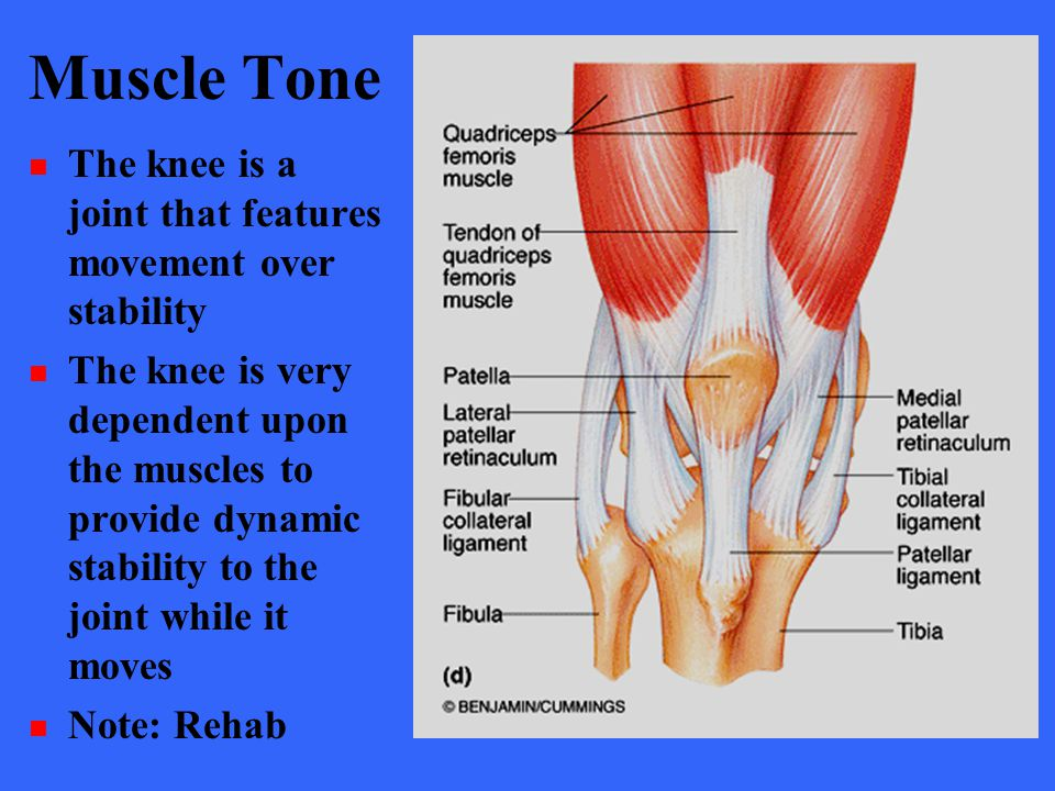 Muscle Tone The knee is a joint that features movement over stability