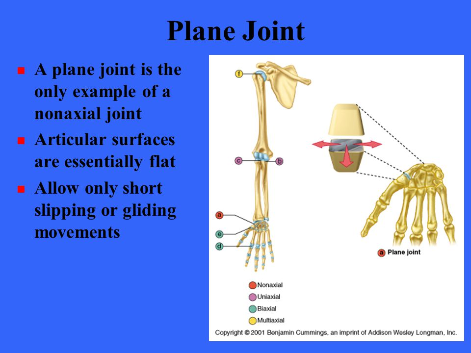 Plane Joint A plane joint is the only example of a nonaxial joint