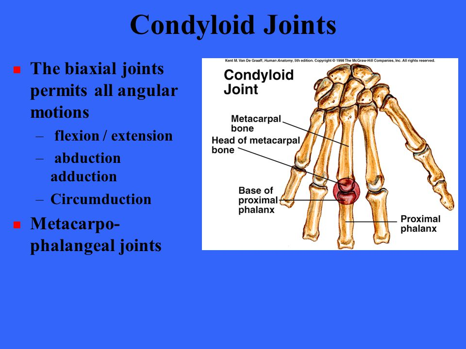 Condyloid Joints The biaxial joints permits all angular motions