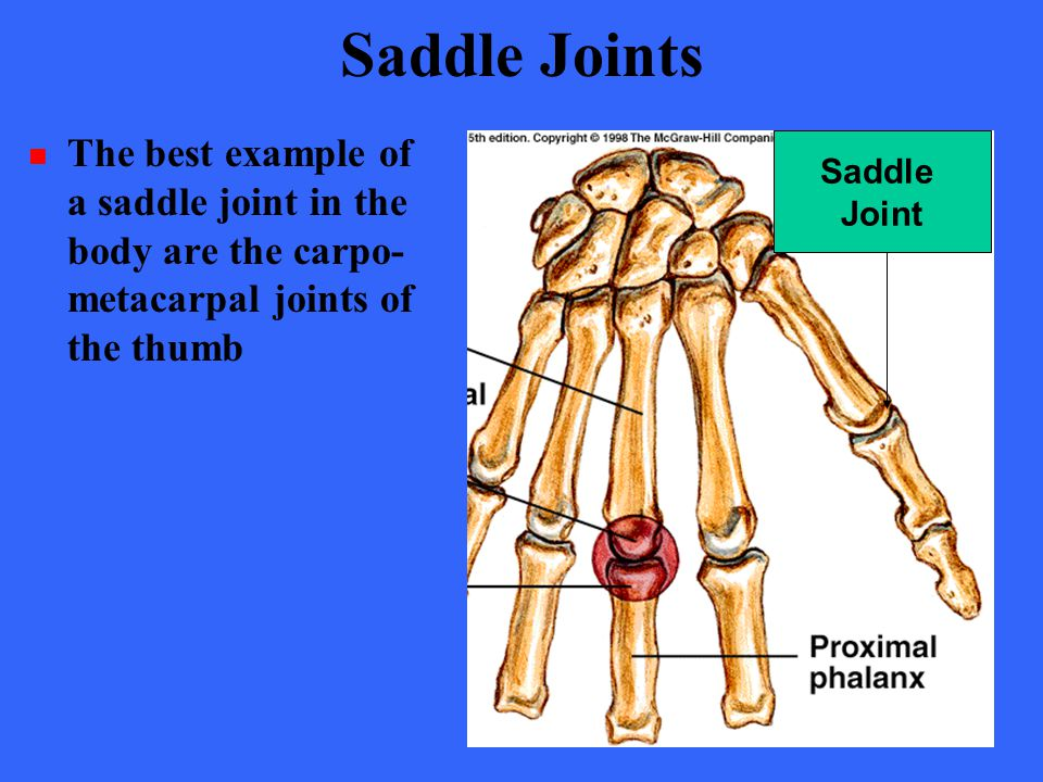Joints Chapter Ppt Video Online Download