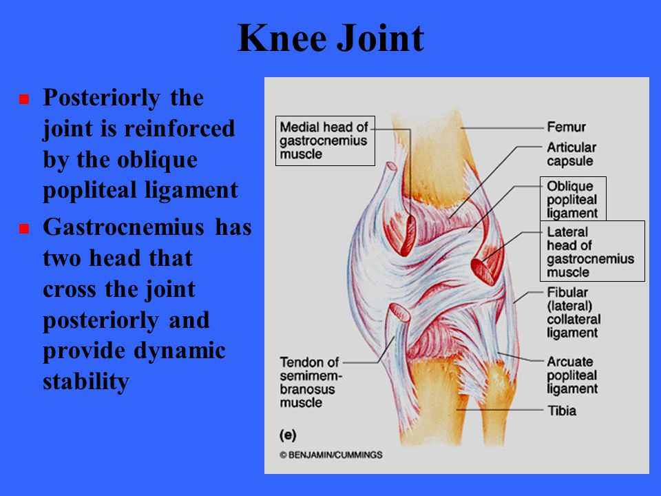 Knee Joint Posteriorly the joint is reinforced by the oblique popliteal ligament.