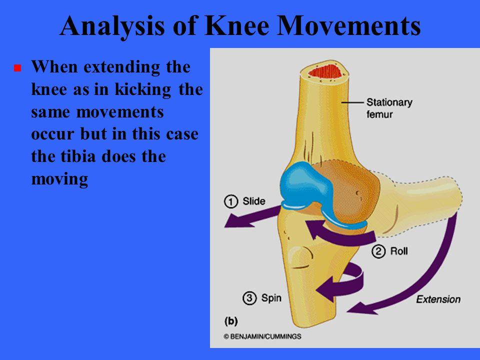 Analysis of Knee Movements