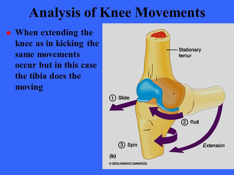 Analysis of Knee Movements