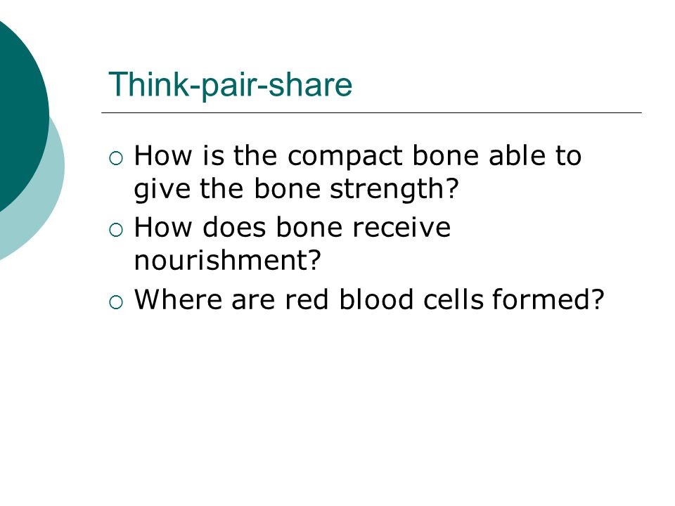 Think-pair-share How is the compact bone able to give the bone strength How does bone receive nourishment