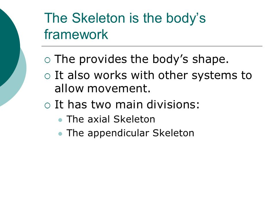 The Skeleton is the body's framework
