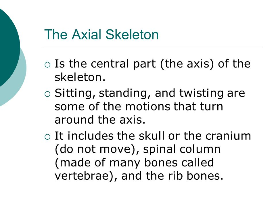 The Axial Skeleton Is the central part (the axis) of the skeleton.