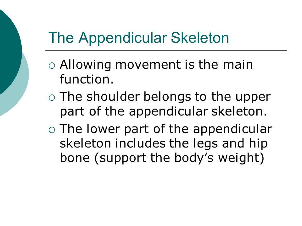 The Appendicular Skeleton