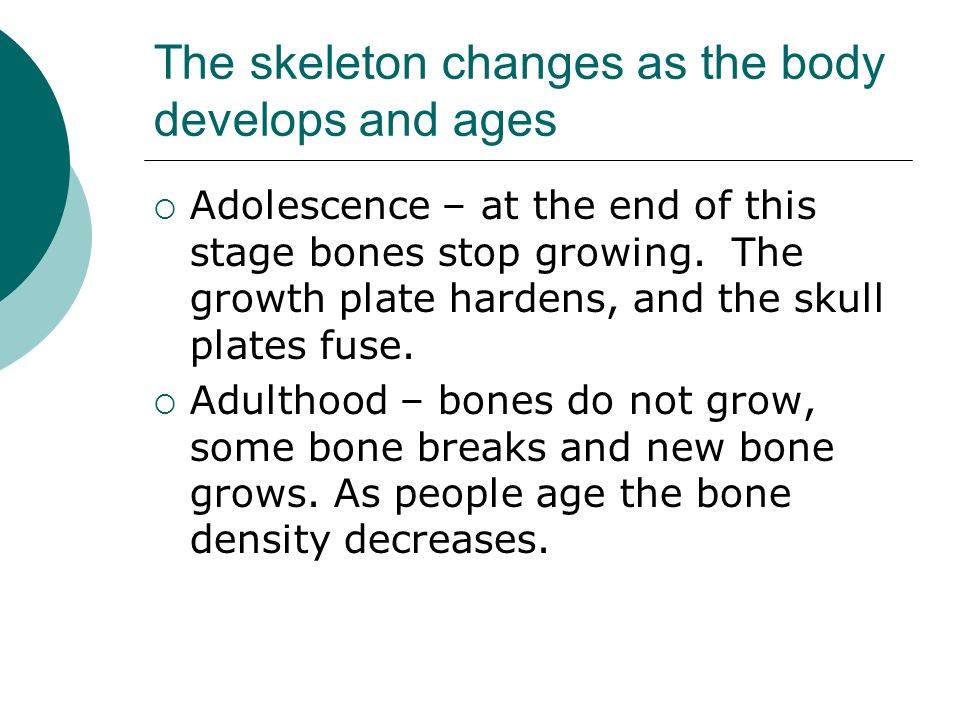 The skeleton changes as the body develops and ages