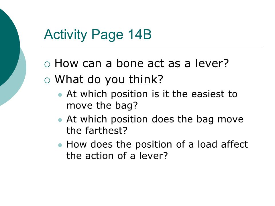 Activity Page 14B How can a bone act as a lever What do you think