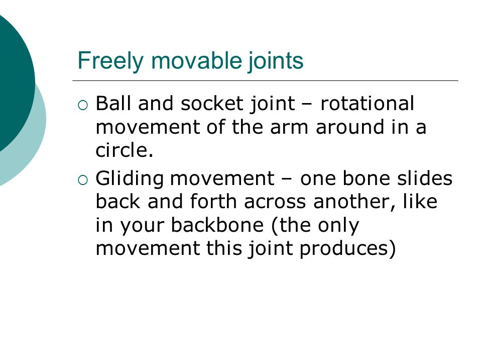 Freely movable joints Ball and socket joint – rotational movement of the arm around in a circle.
