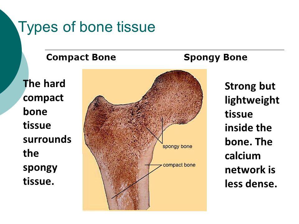 Types of bone tissue Compact Bone. Spongy Bone. The hard compact bone tissue surrounds the spongy tissue.