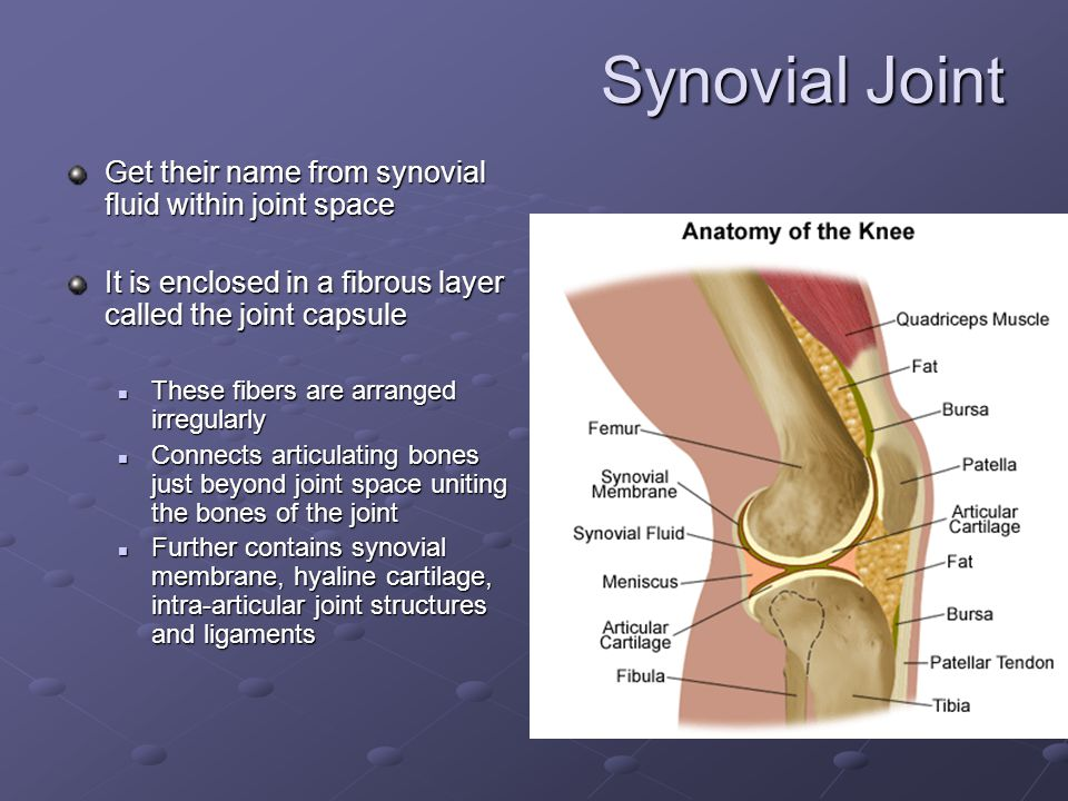 Synovial Joint Get their name from synovial fluid within joint space