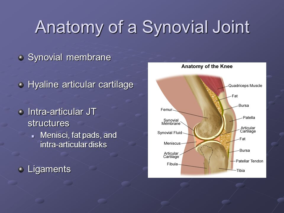 Anatomy of a Synovial Joint