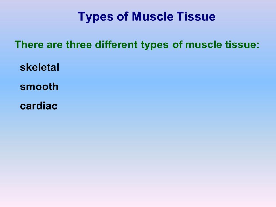 Types of Muscle Tissue There are three different types of muscle tissue: skeletal smooth cardiac