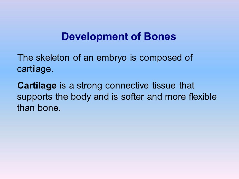 Development of Bones The skeleton of an embryo is composed of cartilage.