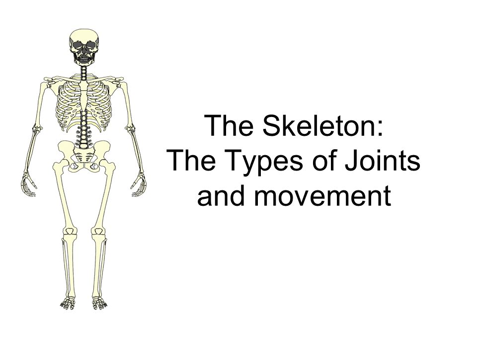 The Skeleton: The Types of Joints and movement