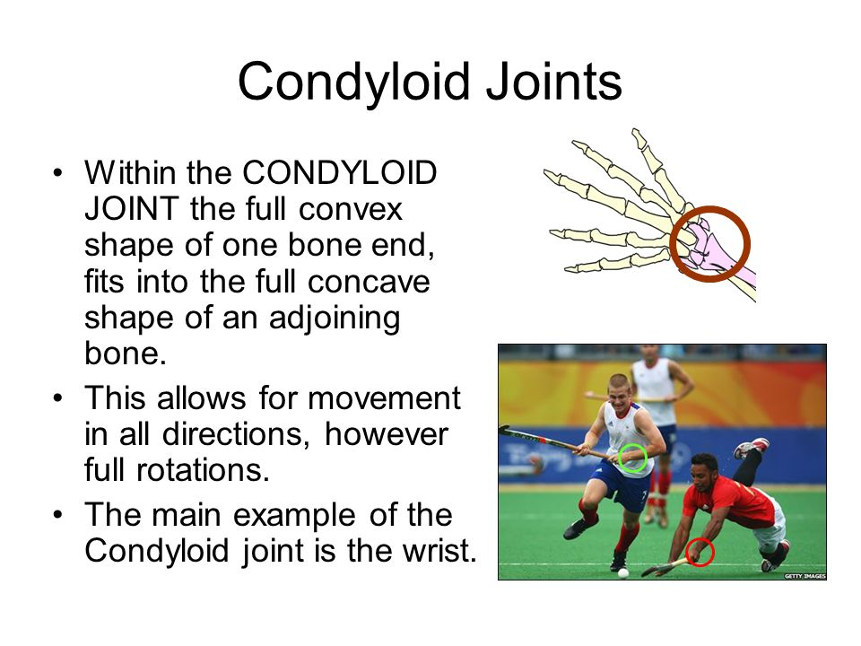 Condyloid Joints Within the CONDYLOID JOINT the full convex shape of one bone end, fits into the full concave shape of an adjoining bone.