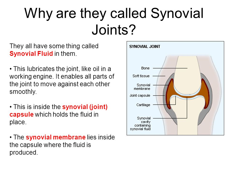 Why are they called Synovial Joints