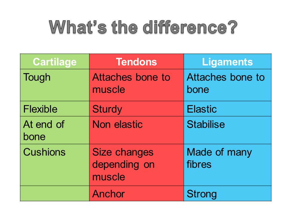 What's the difference Cartilage Tendons Ligaments Tough