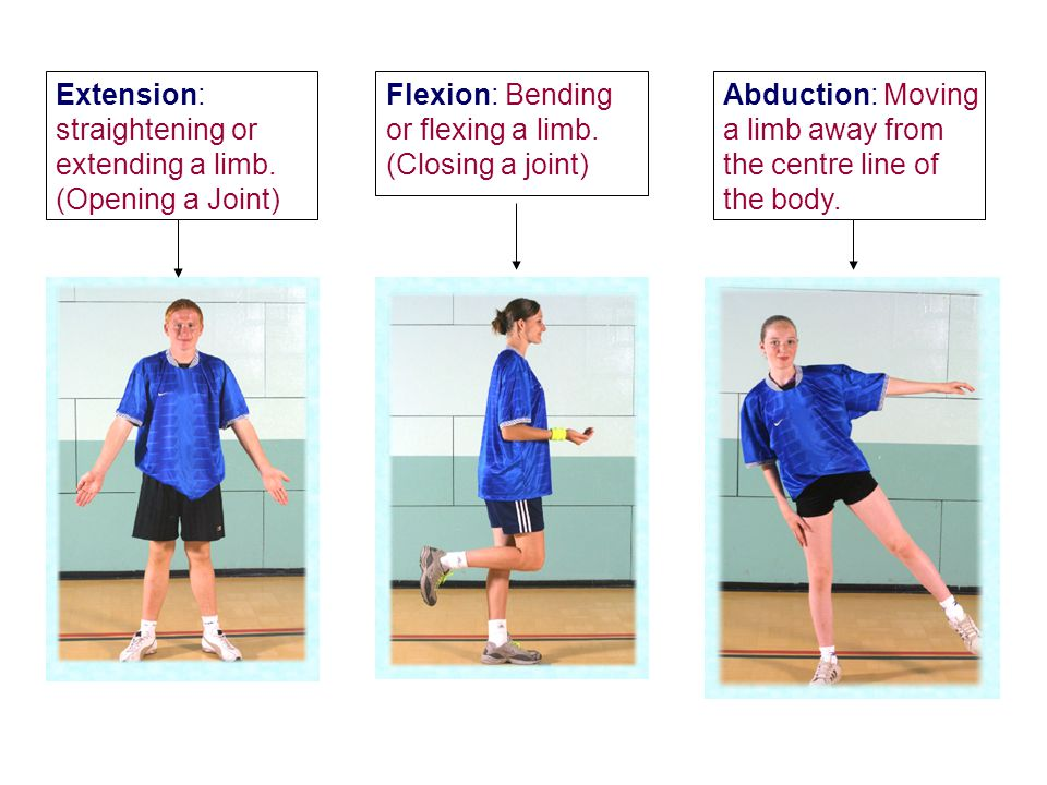 Extension: straightening or extending a limb. (Opening a Joint)