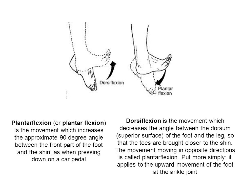 Dorsiflexion is the movement which decreases the angle between the dorsum (superior surface) of the foot and the leg, so that the toes are brought closer to the shin. The movement moving in opposite directions is called plantarflexion. Put more simply: it applies to the upward movement of the foot at the ankle joint