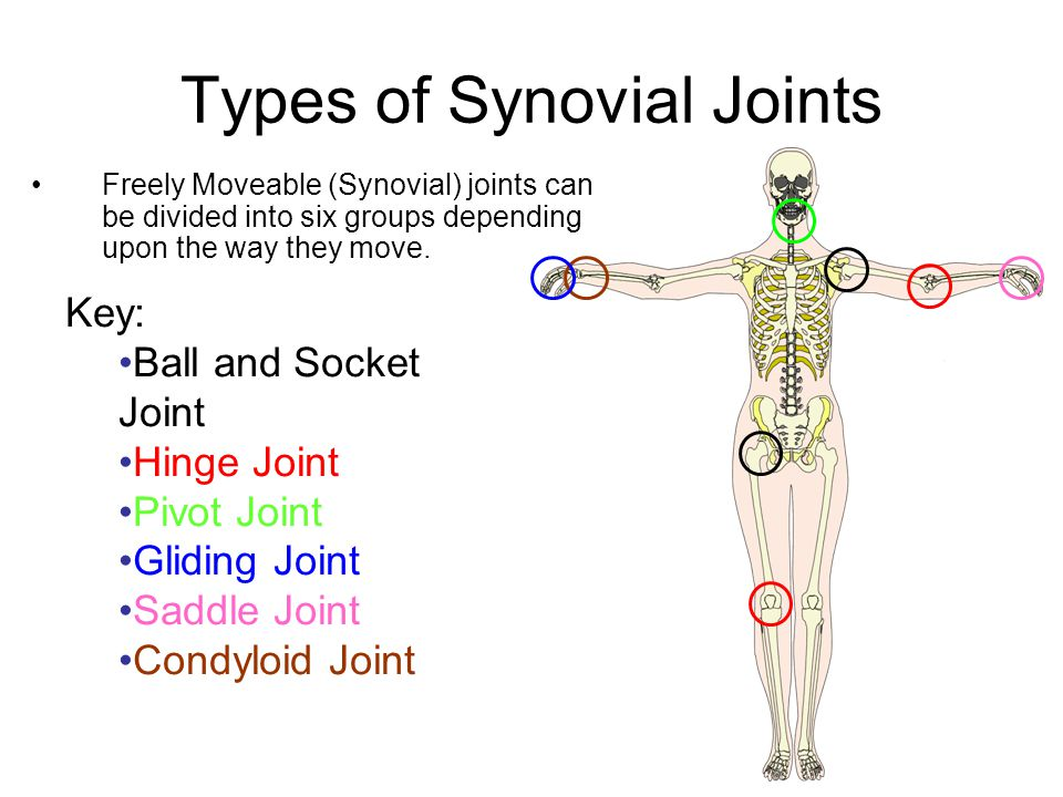 types of joints There are 6 types of synovial joints they have varying shapes, but the important thing about them is the movement they allow let's go through each joint.