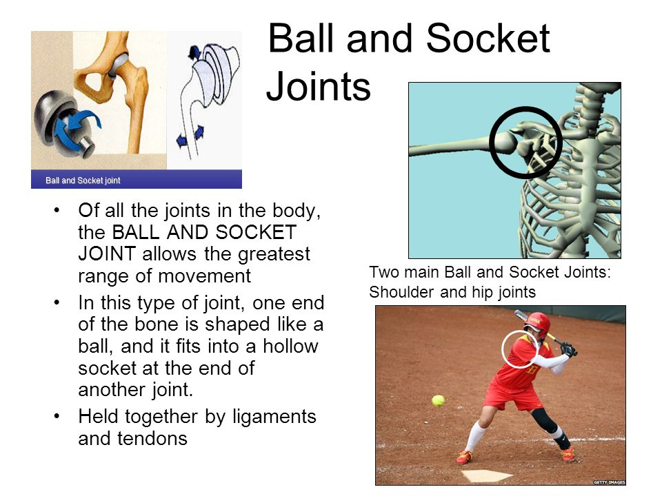 Ball and Socket Joints Of all the joints in the body, the BALL AND SOCKET JOINT allows the greatest range of movement.