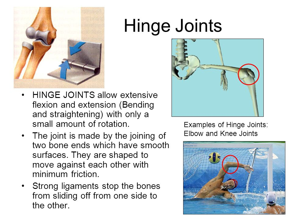 Hinge Joints HINGE JOINTS allow extensive flexion and extension (Bending and straightening) with only a small amount of rotation.