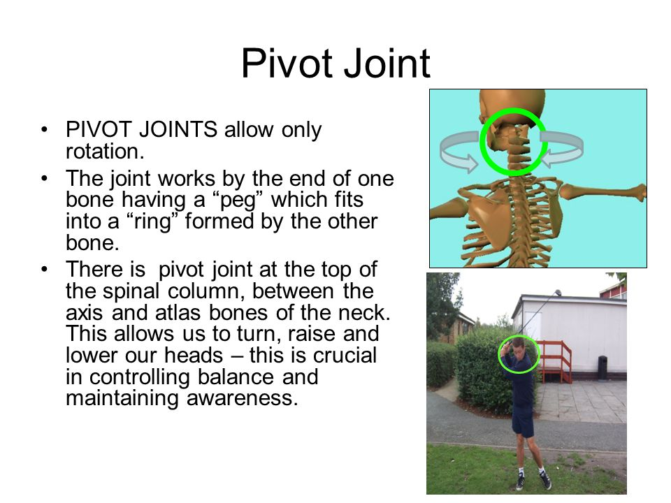 Pivot Joint PIVOT JOINTS allow only rotation.