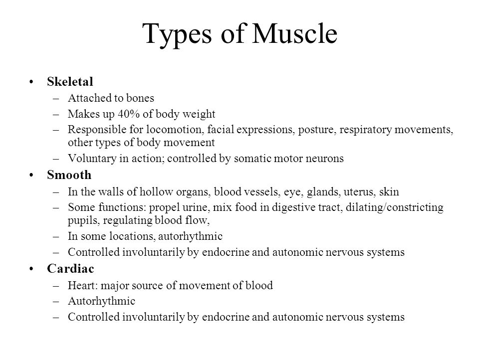 Types of Muscle Skeletal Smooth Cardiac Attached to bones