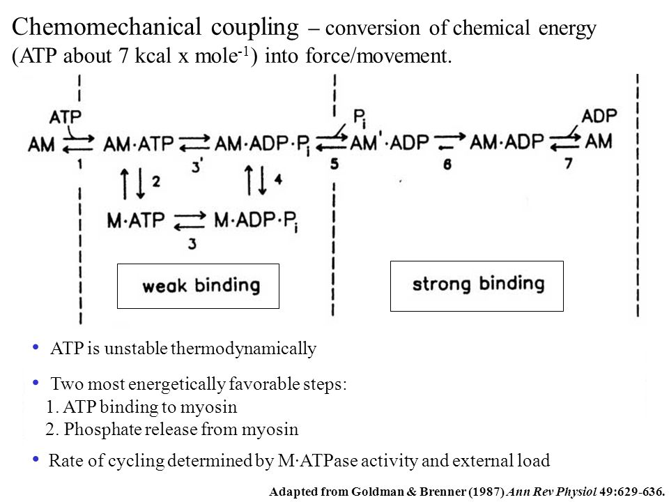 Chemomechanical coupling – conversion of chemical energy