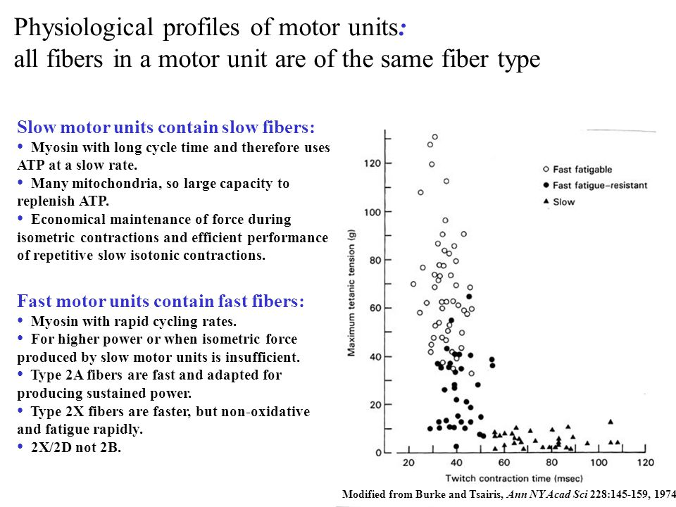Physiological profiles of motor units:
