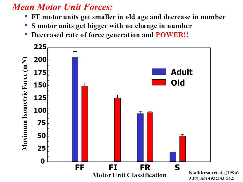Mean Motor Unit Forces: