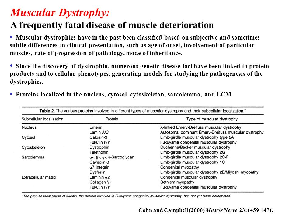 Muscular Dystrophy: A frequently fatal disease of muscle deterioration