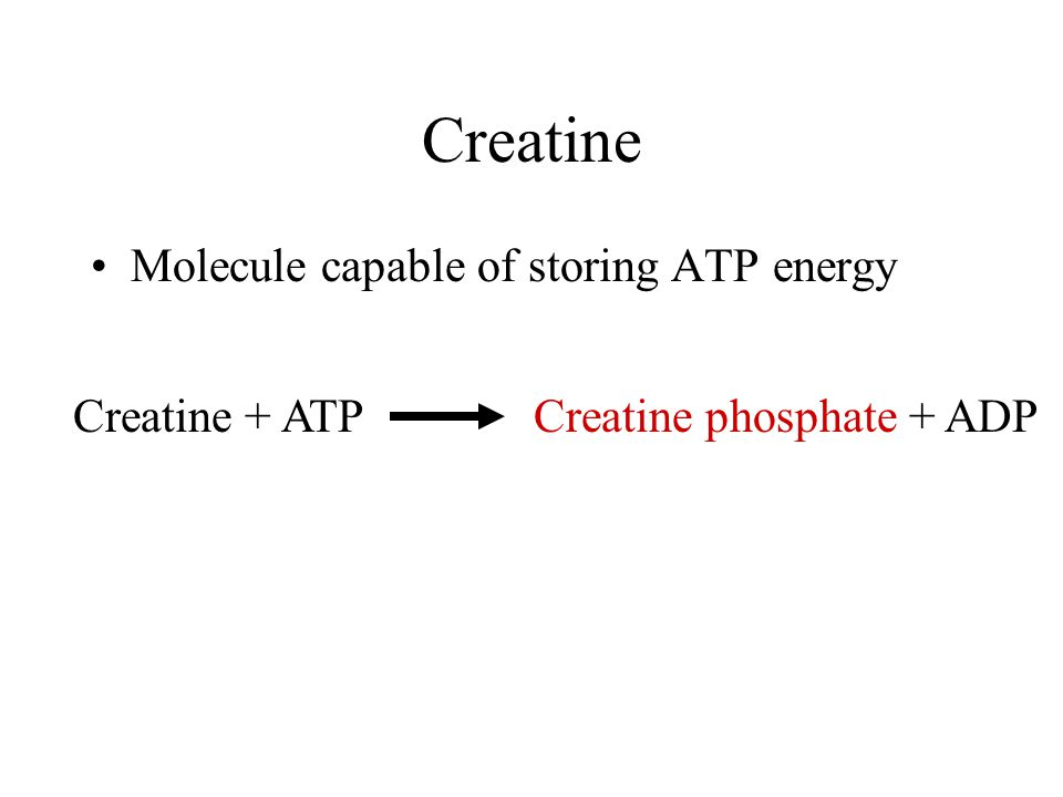 Creatine Molecule capable of storing ATP energy Creatine + ATP