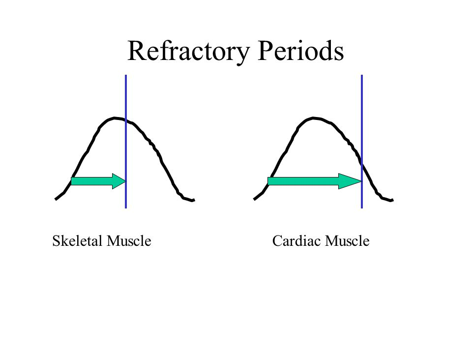 Refractory Periods Skeletal Muscle Cardiac Muscle
