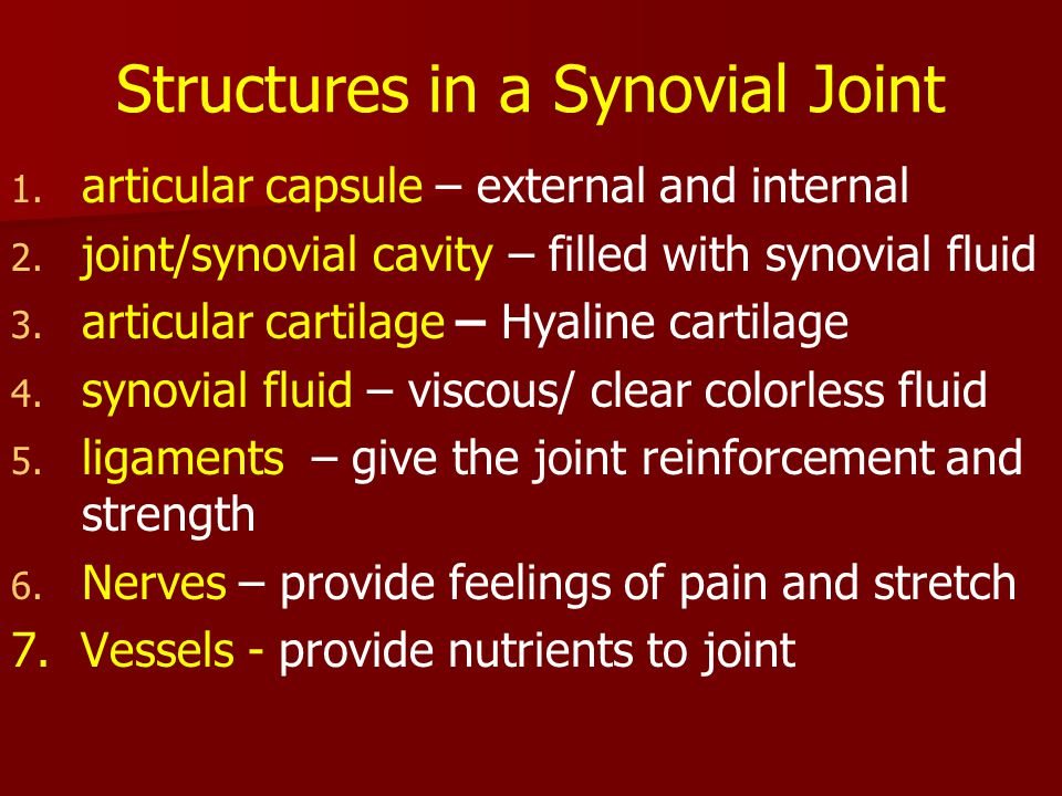 Structures in a Synovial Joint