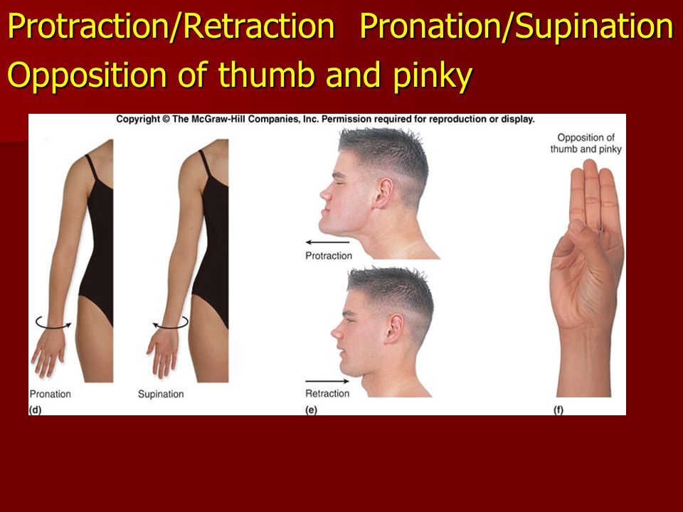 Protraction/Retraction Pronation/Supination