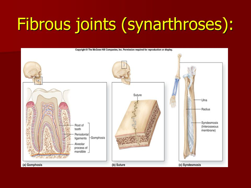 Fibrous joints (synarthroses):