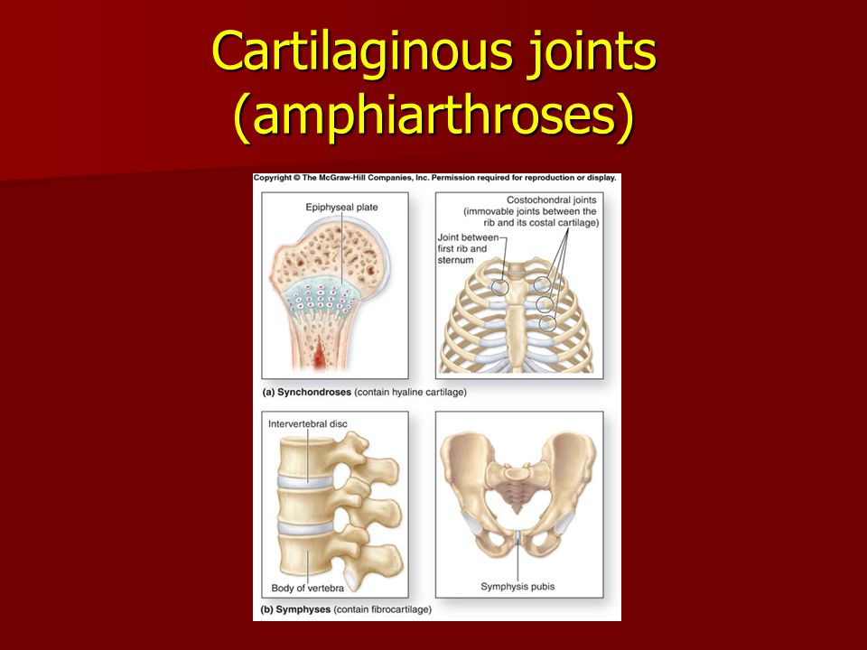 Cartilaginous joints (amphiarthroses)