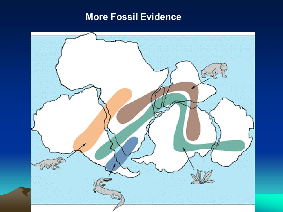 More Fossil Evidence
