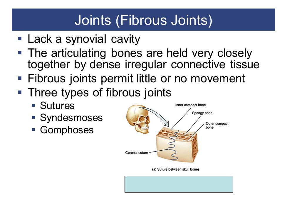 Joints (Fibrous Joints)