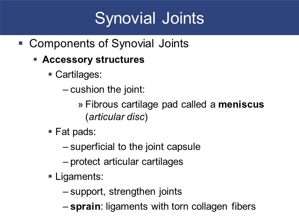 Synovial Joints Components of Synovial Joints Accessory structures