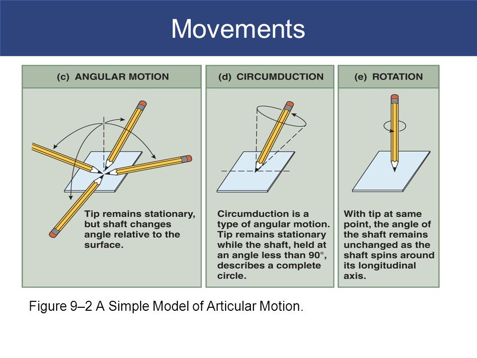 Movements Figure 9–2 A Simple Model of Articular Motion.