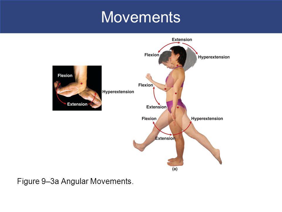 Movements Figure 9–3a Angular Movements.