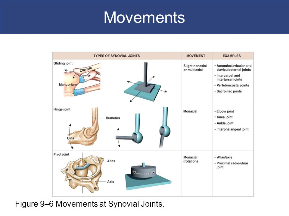 Movements Figure 9–6 Movements at Synovial Joints.