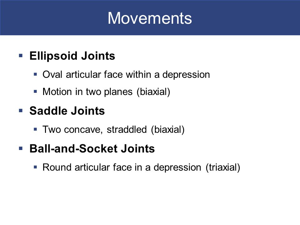 Movements Ellipsoid Joints Saddle Joints Ball-and-Socket Joints